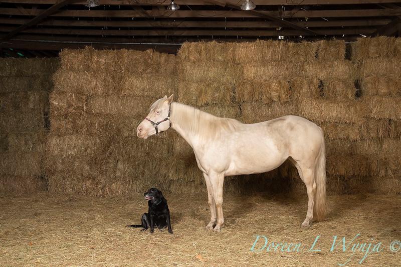 Horse family portrait_134.jpg