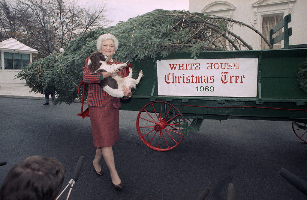 . First Lady Barbara Bush holds Millie after the spaniel showed interest in the 18-foot Fraser Fir which arrived at the White House in Washington, Wednesday, Dec. 6, 1989. The tree, grown in Spartanburg, Pa., will be on display in the White House Blue Room for the Christmas season. (AP Photo/Doug Mills)