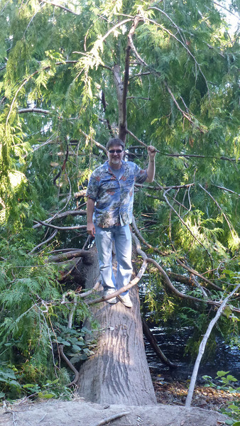 Mike decides to walk on the tree.