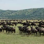 East Africa Great Migration Tour - 2008