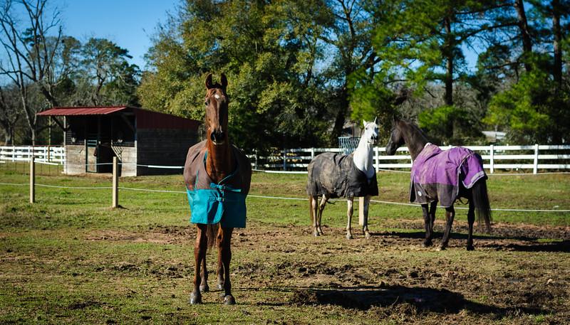 Horse Frolic-6005.jpg