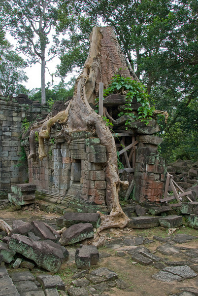 Tree and building at Angkor Wat complex