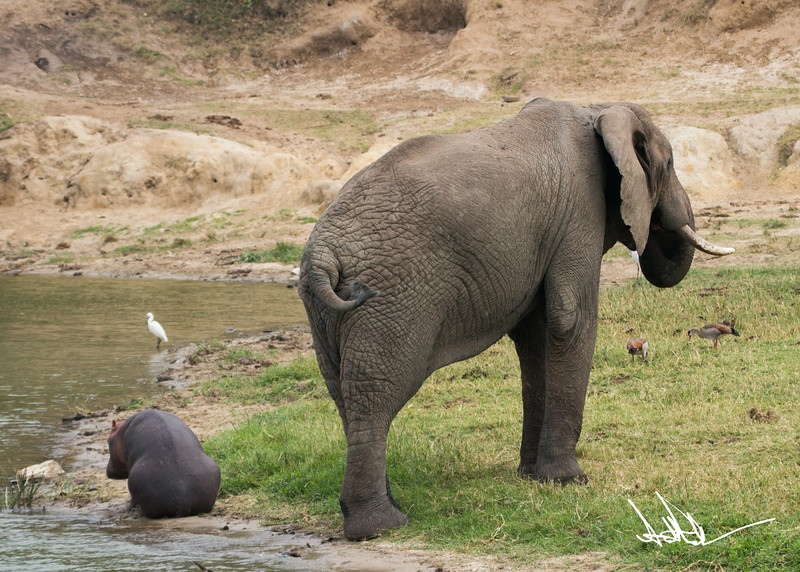 Hippos S-21.jpg
