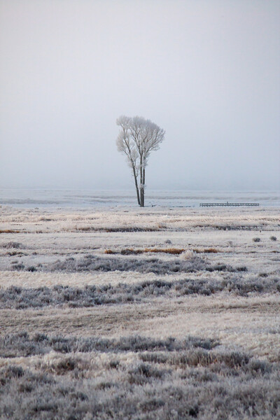 Lonely Tree In Fog