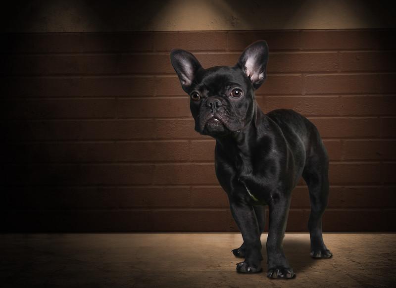 Blackdog-1.jpg