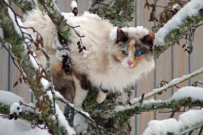 DAY 327 - November 23, 2011 - Cat-Cat (or Beautiful Blue Eyes) Cynthia Meyer, Tenakee Springs, Alaska