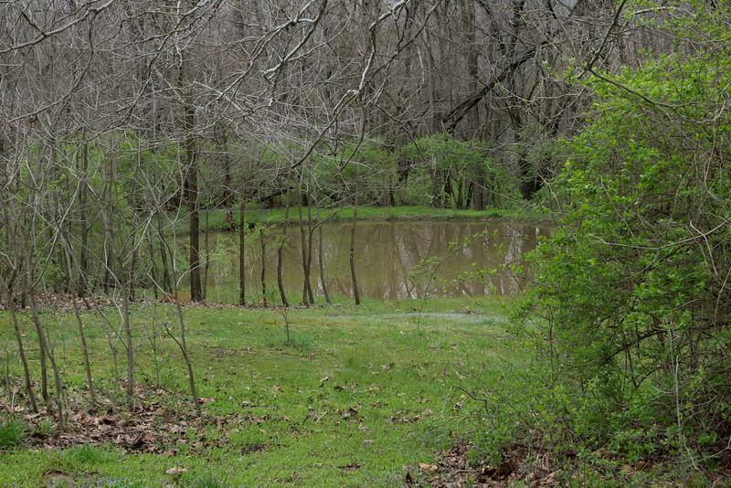 Spring rains fill the pond