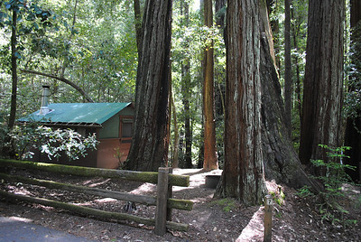 BIG BASIN, CA 2011