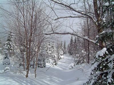 2006-03-02 Sentier du moulin (Michel Valin)