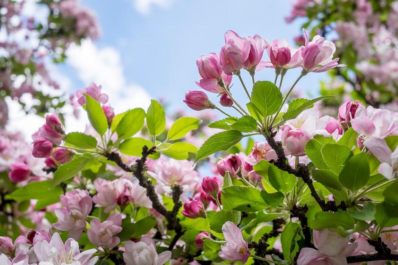 spring_15_024.jpg