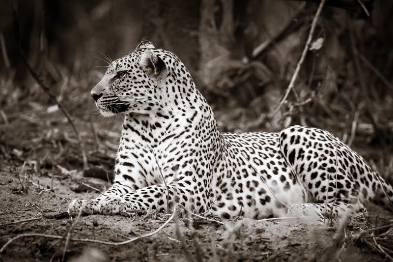 LeopardHills-20191029-2090.jpg