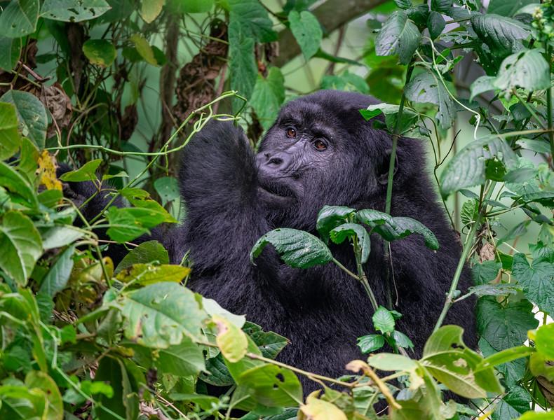 Uganda_T_Gor-2238.jpg
