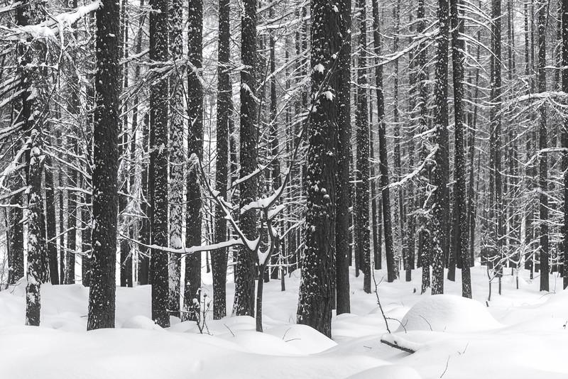 White Winter I