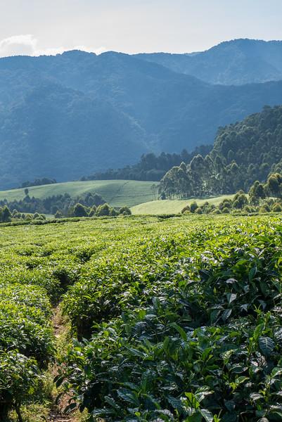 Nyugwe-Rwanda-7.jpg