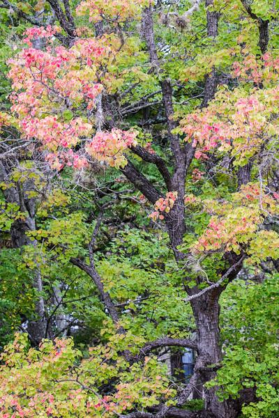 Fall Colors - Lake LBJ, TX