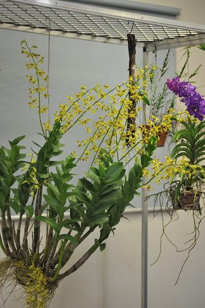 Nightcliff Orchid Society, meetings 2017