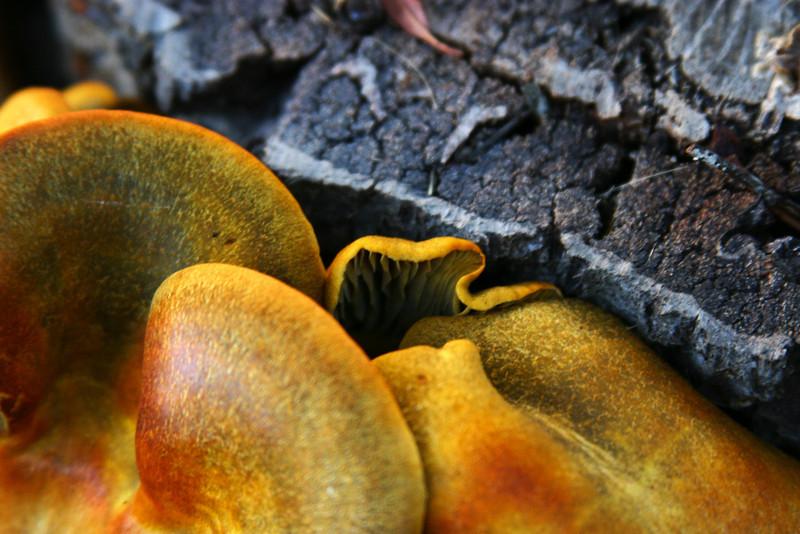 YellowFungus.jpg