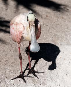 Flamingo Gardens 1-15-19