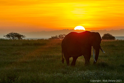 Elephant Sunrise #2