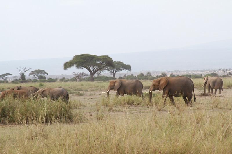 Kenya 2019 #2 602.JPG