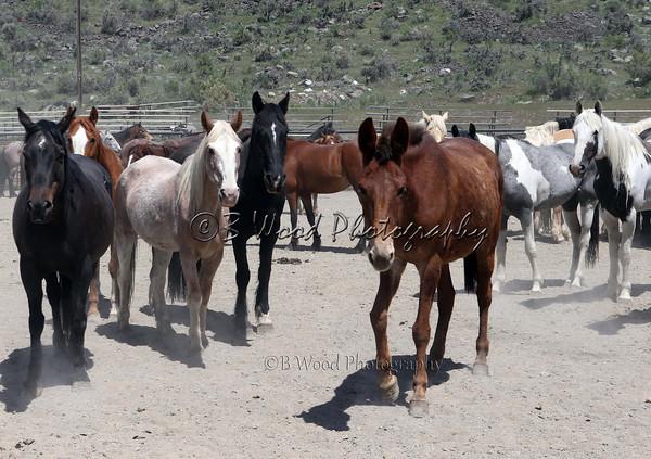 2014 Hell's a-Roarin' Annual Horse Drive