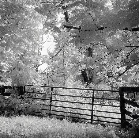 misc black and white  around the farm