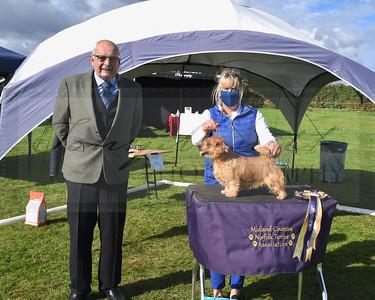 Midland Counties Norfolk Terrier Association 2020