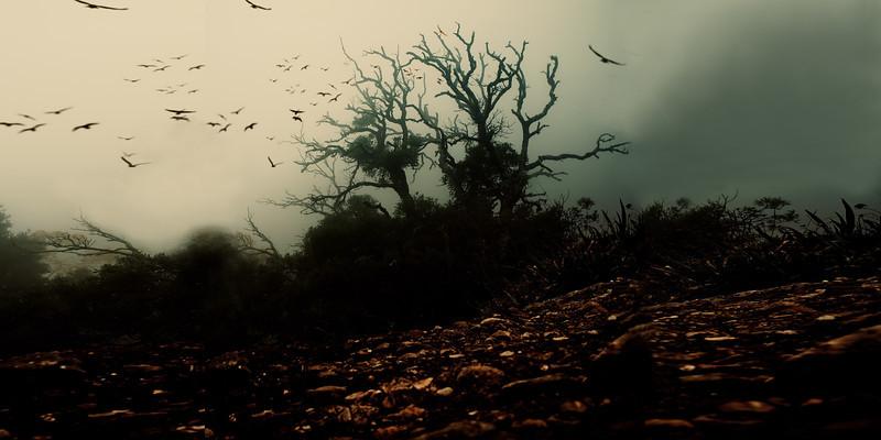 Dark tree.jpg