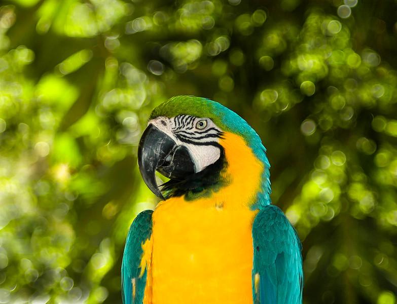 Bali Birds-7.jpg