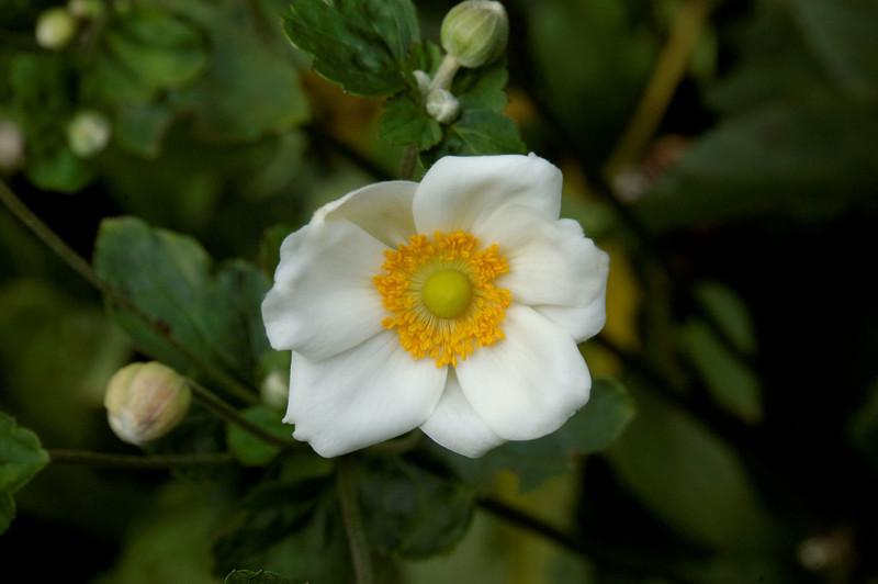 Anemone (7).jpg
