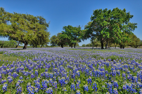 Flowers and Bees - Pedernales River Nature Park, Johnson City, TX - Wed, Mar 29, 2017