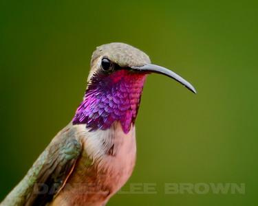 Southeastern Arizona birding trips, 2013
