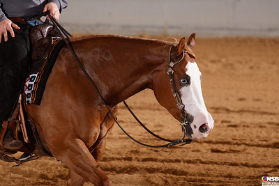 Wednesday Novice Horse Set 7 48-55
