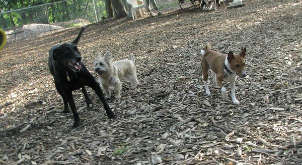 PICS JUNE 12::CHASE, Bela, Chloe