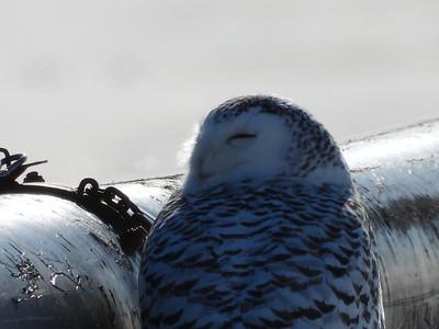 20200208 Cobourg Birds