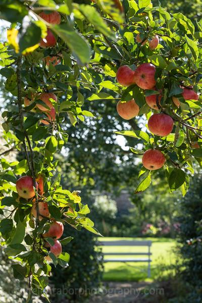 Norton Conyers apples and dahlias-20.jpg