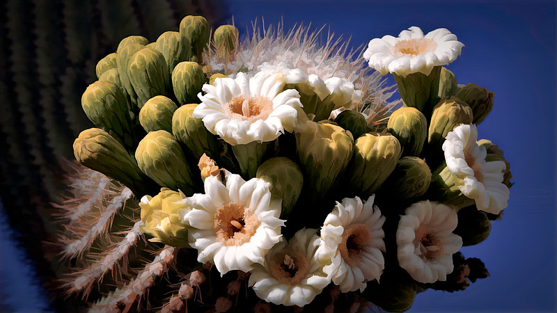 Catus Flowers-BuzSim_CustomDesat.jpeg
