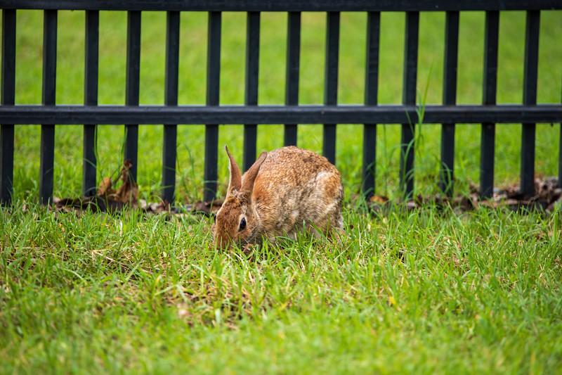 Rabbit-001