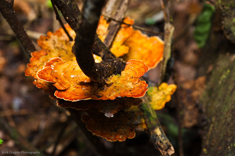Fungus in the rain forest of Peru.