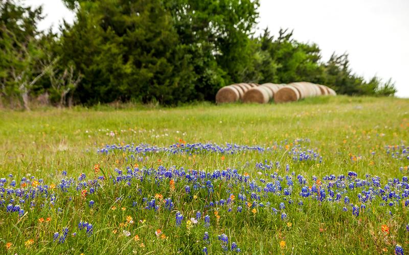 2016_4_9 Texas Wildflower Shoot-8554.jpg