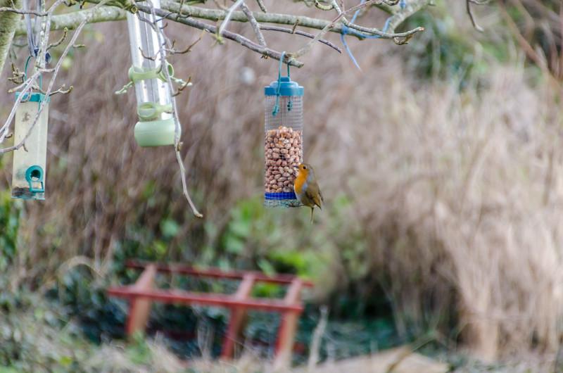 Birds 180118-63.jpg