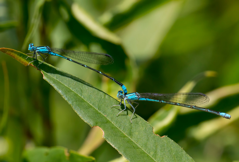 Pair in Tandem. Summit Bridge Ponds