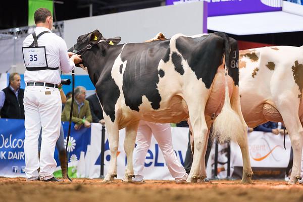 UK Dairy Day 2019