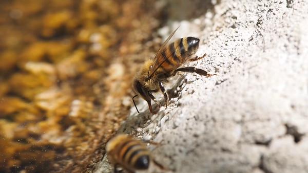 Bee videos