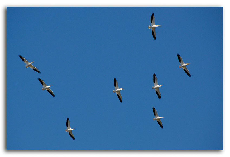 Cranes in Flight.jpg