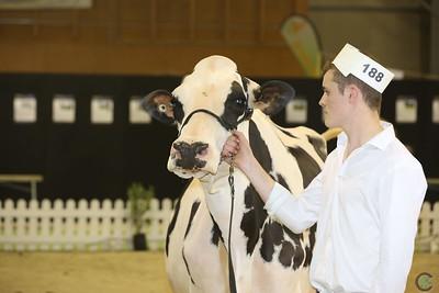 Holstein Intermediate and Senior
