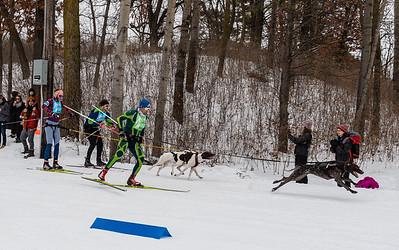 2020 Loppet Skijoring