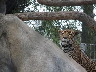 Enhanced Zoo Visit, July, 2010