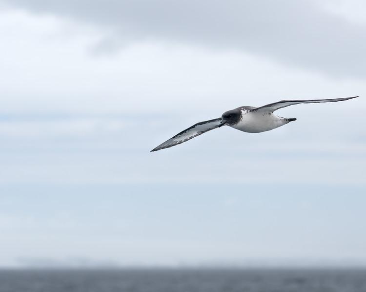 Antarctica-4247.jpg