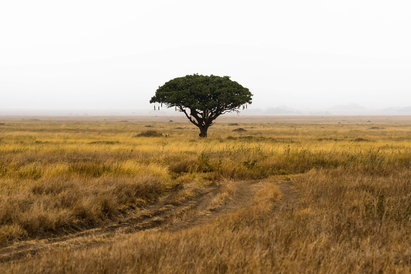 Tanzania-safari-9.jpg